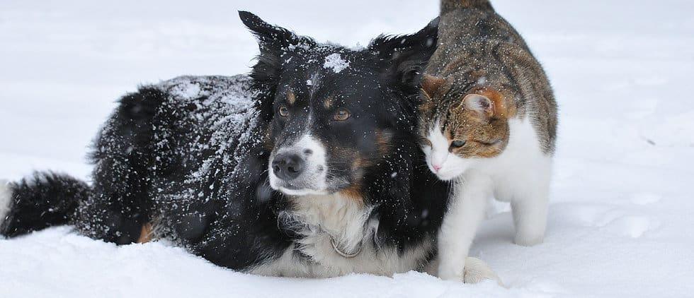 Pet sitting and dog walking
