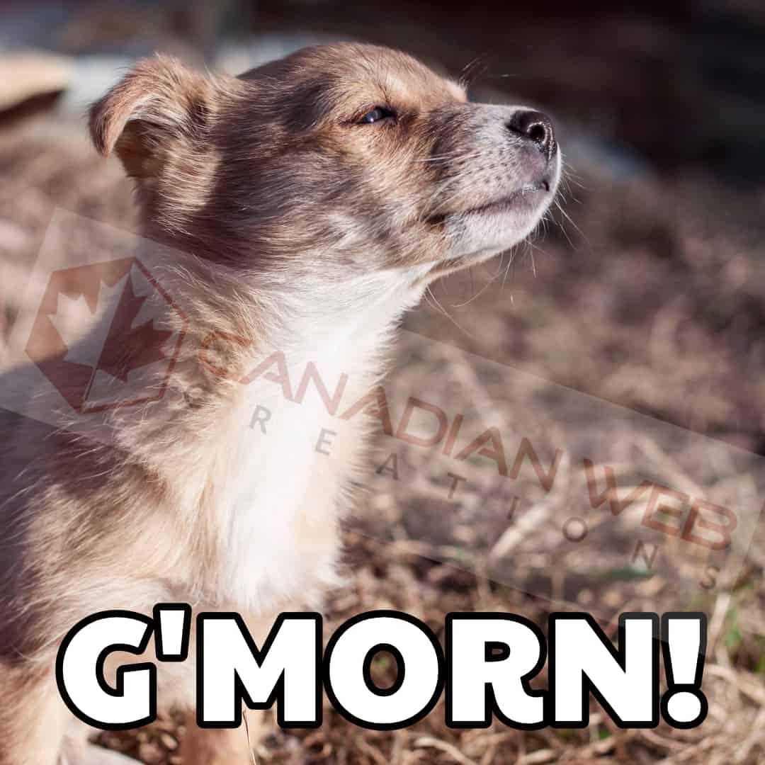 G'morn